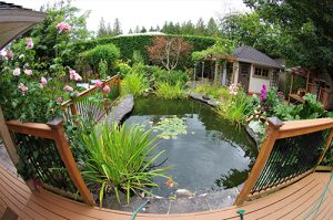 garden pond surrounded by plants and decking area